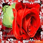 Тебе я розу посылаю