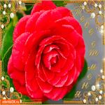 Тебе роза от меня