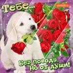 Тебе розы без повода, но от души