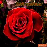 Тебе с любовью красный цветочек