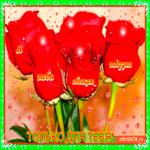 Открытка красные розы только для тебя