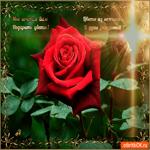 Цветы из нежности