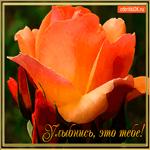 Улыбнись цветок тебе
