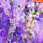 Красивая открытка с весной