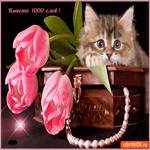 Вместо 1000 слов тюльпаны дарю