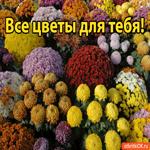 Все цветы для тебя