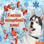 Я желаю вам волшебной зимы