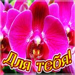 Яркая открытка с орхидеями