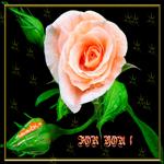 Замечательная роза для тебя