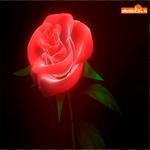 Зажигательная роза
