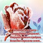 Зимняя открытка с розой