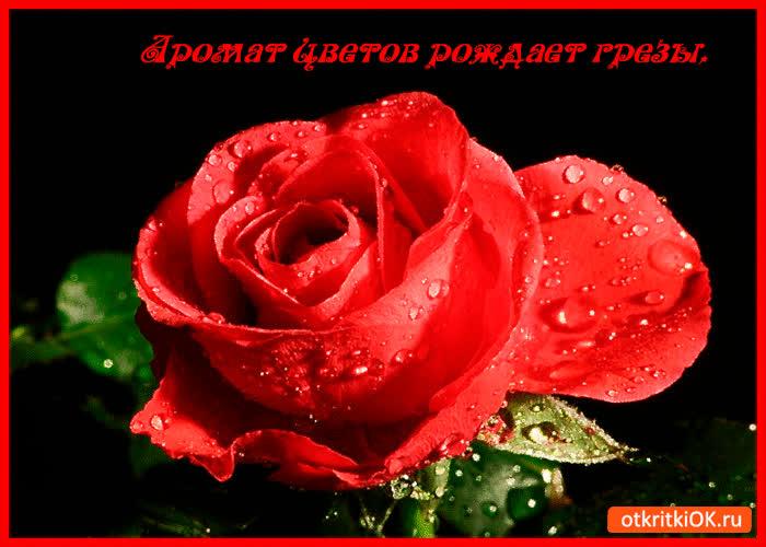 Картинка аромат цветов рождает грёзы