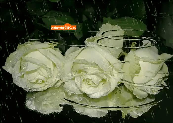 Картинка букет роз под дождём