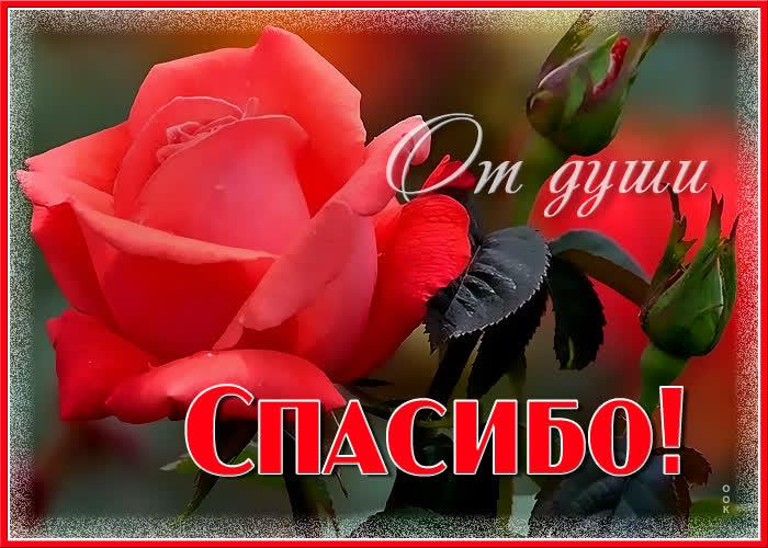 Открытка для тебя спасибо большое - Скачать бесплатно на otkritkiok.ru