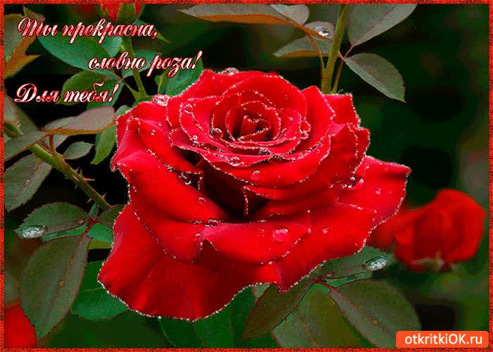 Картинка для тебя! ты прекрасна словно роза