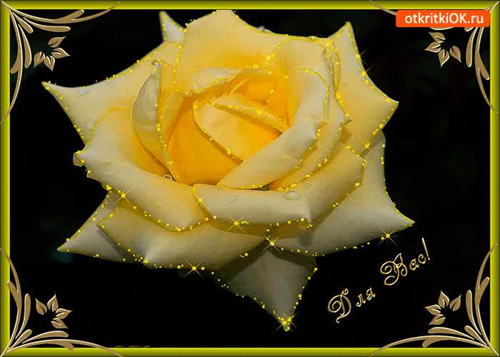 Картинка для тебя желтая роза для меня