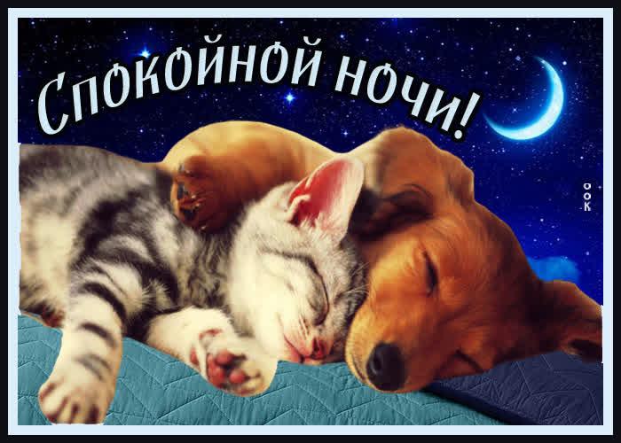 Открытка душевная открытка спокойной ночи