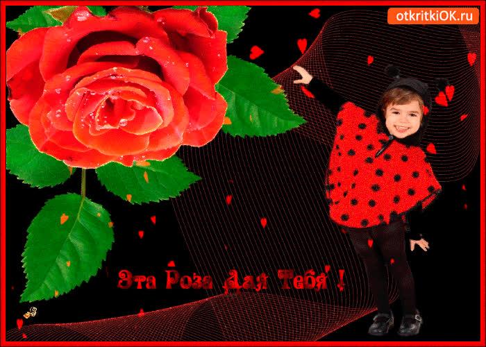 Картинка эта маленькая роза для тебя