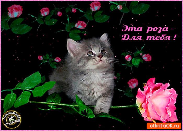 Картинка эта милая роза для тебя