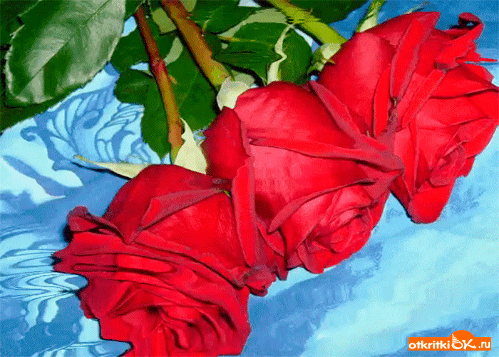 Картинка эти прекрасные розы для тебя