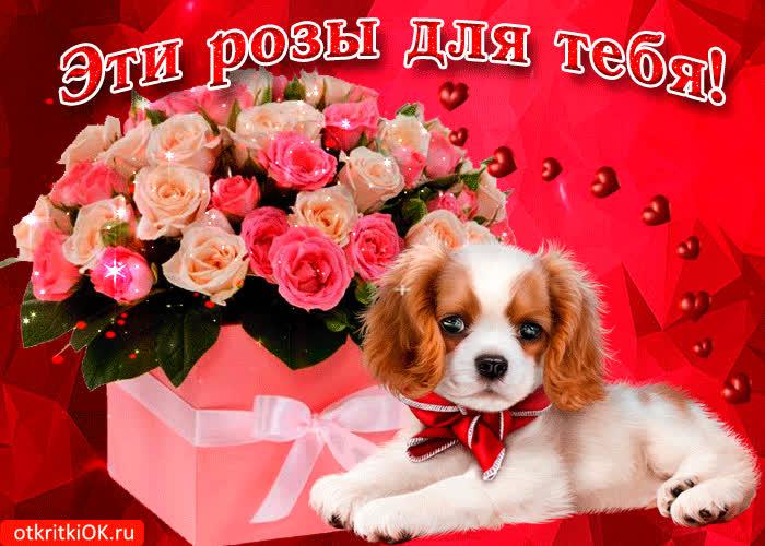 доступно фото все розы только для тебя новое сыроедческое меню
