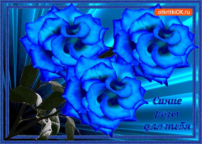 Картинка эти синие розы для тебя