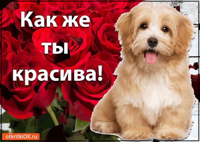 Картинка с надписью ты пр