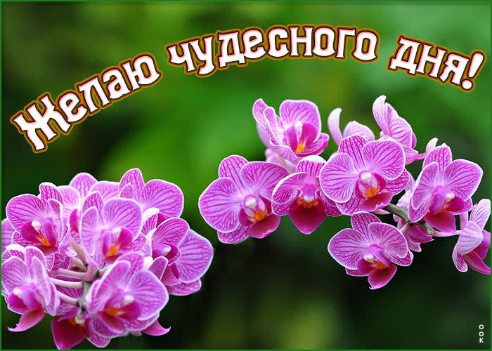 Открытка картинка чудесного дня с орхидеями