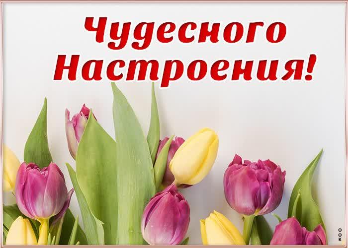 Открытка картинка чудесного настроения с тюльпанами