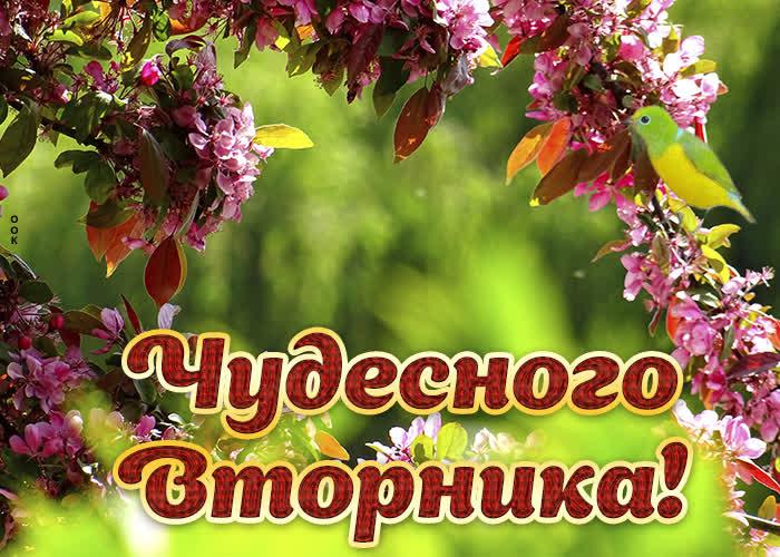 Картинка картинка чудесного вторника с цветами