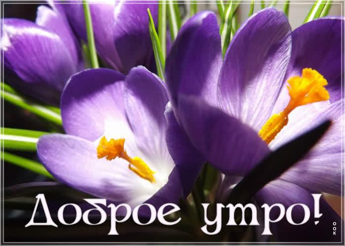 Картинка картинка доброе утро красивые цветы