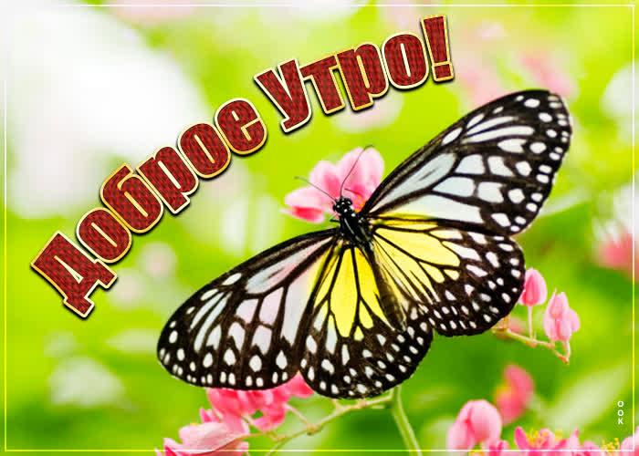 Открытка картинка доброе утро с бабочкой