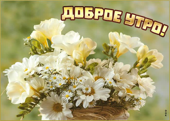 Открытка картинка доброе утро с белыми цветами