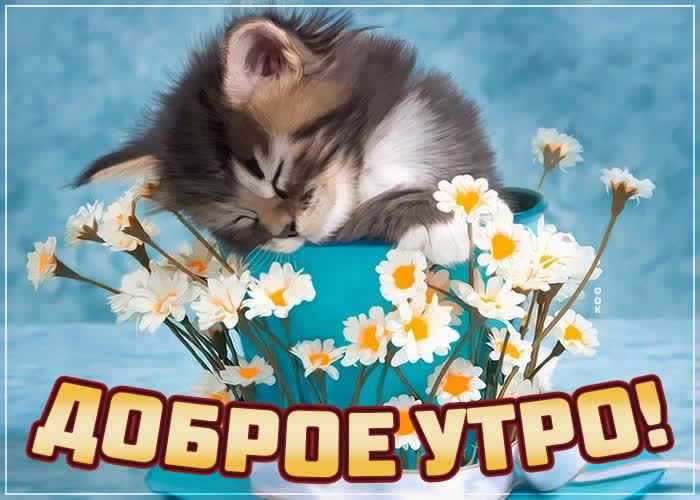 Открытка картинка доброе утро с котенком и ромашками