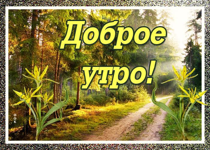 Картинка картинка доброе утро с лесом