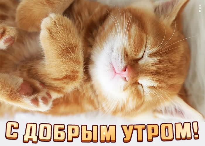 Картинка картинка доброе утро с маленьким котенком