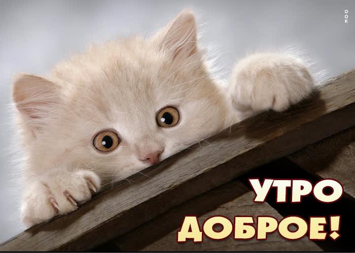 Картинка картинка доброе утро с милым котиком