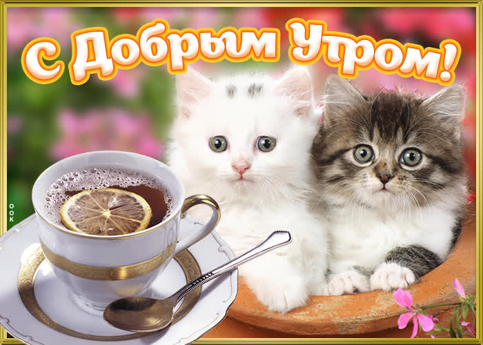 Картинка картинка доброе утро с милыми котиками