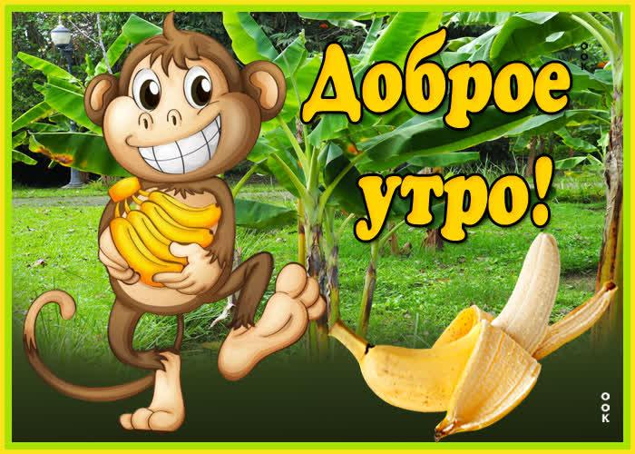 Картинка картинка доброе утро с обезьянкой