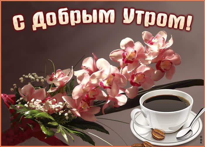 Открытка картинка доброе утро с орхидеями