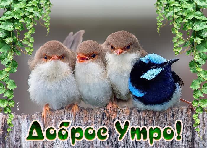 Картинка картинка доброе утро с птичками