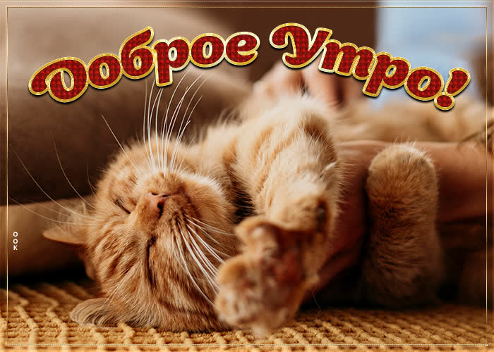 Картинка картинка доброе утро с рыжим котом