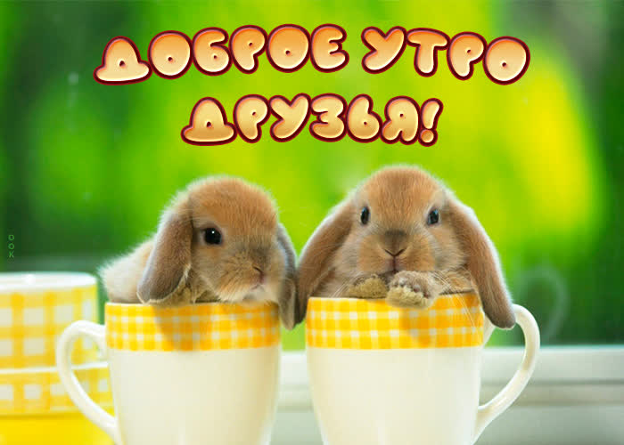 Открытка картинка доброе утро с зайчиками