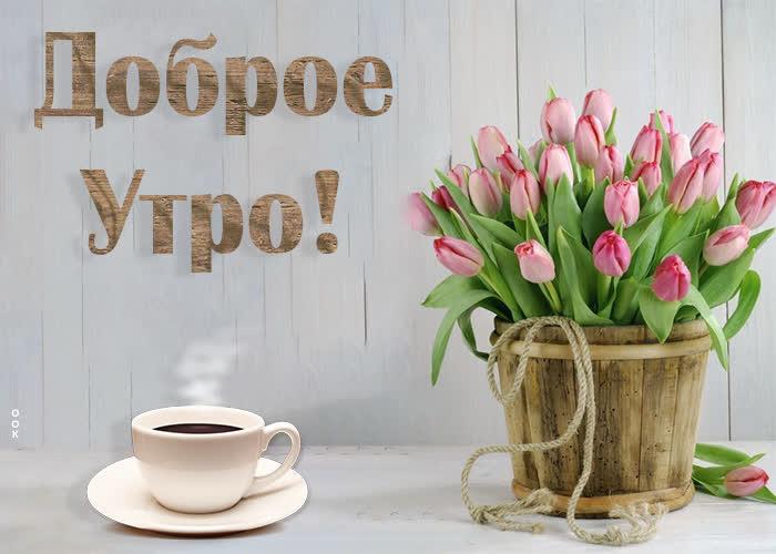 Картинка картинка доброго утра с охапкой тюльпанов