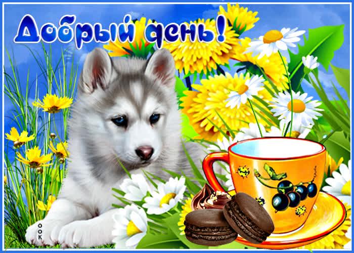 Картинка картинка добрый день с собачкой