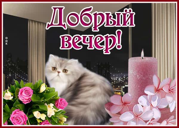 Открытка картинка добрый вечер с котиком