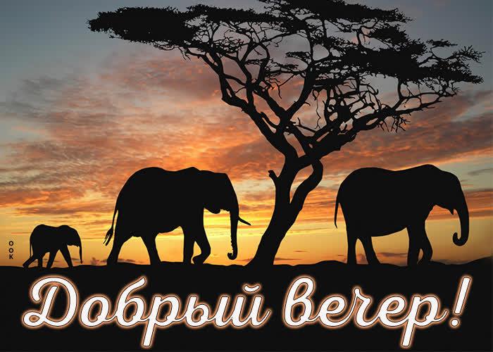 Открытка картинка добрый вечер со слонами