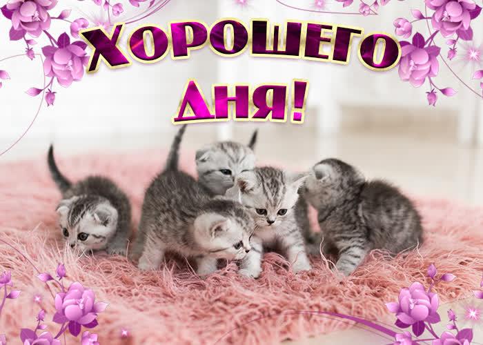 Картинка картинка хорошего дня с котятами