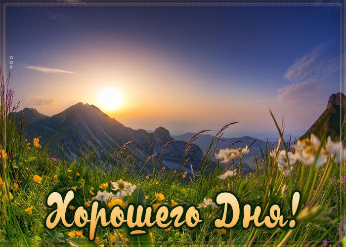 Открытка картинка хорошего дня с полевыми цветами