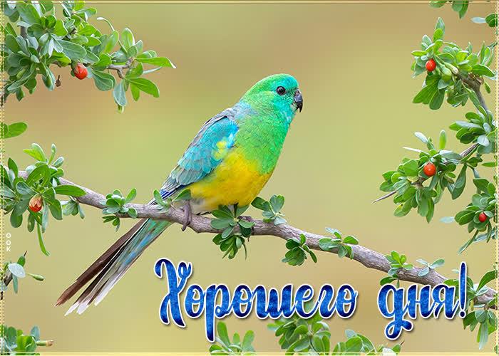 Картинка картинка хорошего дня с птичкой